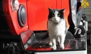 В международный день кошек спасенный на пожаре кот Гидрант получает поздравления