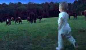 В Вилегодском районе двухлетний карапуз убежал от мамы в соседнюю деревню