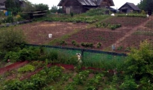 Камера «Ростелекома» помогла архангельским дачникам вычислить зайца-вандала