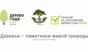 Конкурс «Российское дерево года-2020» продолжается