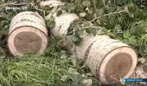 ВИсакогорке аварийные деревья падают нажилые дома