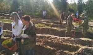 Архангельская область присоединилась к всероссийской акции «Сохраним лес»