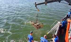 В Балтийском море завершился очередной этап разминирования немецкой баржи, затонувшей во время Великой Отечественной войны