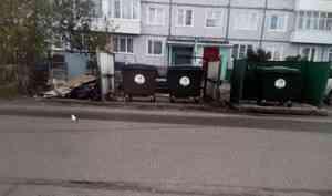 В Архангельске проверили контейнеры, в которых копался медведь