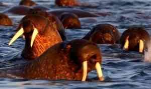 Изарктической экспедиции вернулись учёные института проблем экологии иэволюции РАН иЦентра морских исследований МГУ