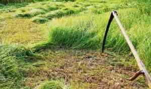 В Пинежском районе женщина убила сожителя косой за нанесённые побои
