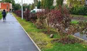 Снова вандалы! В парке «Зарусье» неизвестные архангелогородцы выкопали саженцы
