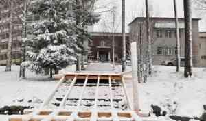 На территории санатория «Беломорье» вырубили реликтовые сосны