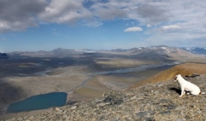 Федеральный бюджет выделит семь миллиардов рублей на добычу свинца и цинка на Новой Земле