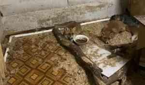 Архангельский центр помощи дикой фауне «Мата-мата» переживает трудности
