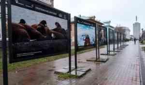 В Архангельске на проспекте Чумбарова-Лучинского открылаcь фотовыставка «Притяжение Арктики»