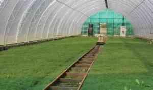 Вельский тепличный комплекс работает на будущее северного леса
