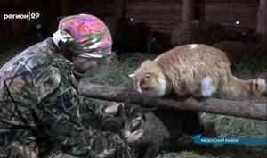 Фермеры Поморья переводят стада на зимовку