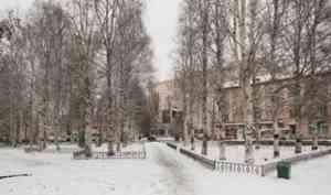 При строительстве культурно-делового центра в Архангельске все деревья будут сохранены