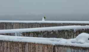 2 декабря в Архангельске будет ноль и пройдёт небольшой снег