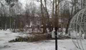 В Архангельске срубили живые деревья для установки искусственной ёлки