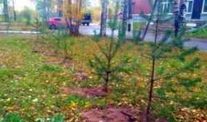 На окраине Архангельска в 2021 году ожидается высадка тысяч деревьев