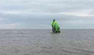 Экологи провели исследование Белого моря на наличие микропластика