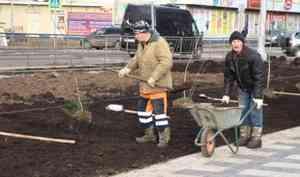 В2021 году вАрхангельске высадят более шести тысяч деревьев