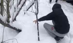 В Северодвинске задержали водителя-закладчика