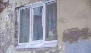 17 января в Архангельске резко потеплеет на один день