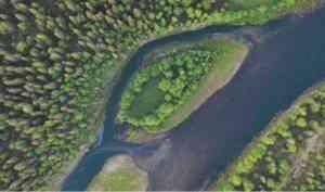 WWF представил фильм-экспедицию по первозданным лесам Архангельской области