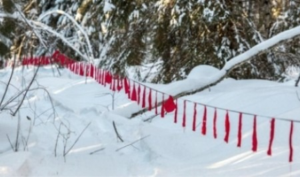 В Поморье до конца февраля разрешена охота на волков