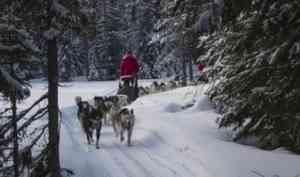 В Архангельской области стартовала экспедиция на собачьих упряжках