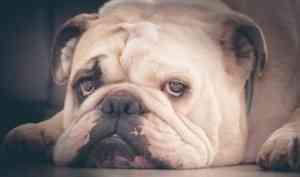 Жительница Северодвинска хотела купить щенка, а попалась на стандартную уловку мошенников