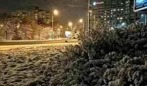 Пока выспали: одна изцентральных архангельских площадей может лишиться деревьев