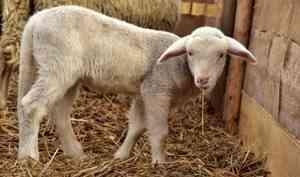 Умолдавских овец, застрявших впорту Экономия, появился шанс остаться вАрхангельске