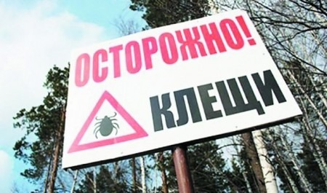 В Поморье зарегистрированы первые случаи присасывания клещей