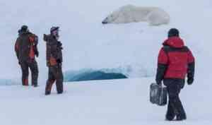 В «Русской Арктике» сняли документальный фильм о белых медведях