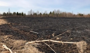 Спасатели и пожарные за сутки 12 выезжали на тушение горящей травы