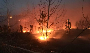 В Архангельской области сгорела деревня из-за пала травы