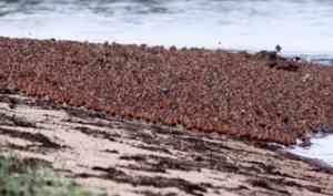 Оценить «здоровье» Арктики помогут исследования миграции птиц в нацпарке «Онежское Поморье»