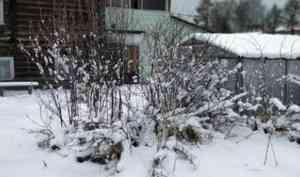В середине майских праздников в районах Архангельской области прошли снегопады