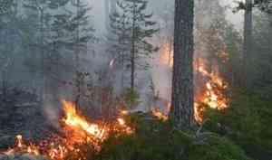 В Архангельской области запретят ходить в лес