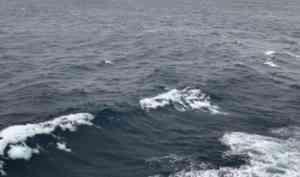 Дневники АПУ-2021: Наблюдения за китами, птицами и …людьми