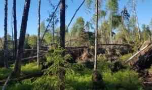 В Котласском лесничестве проведен лесопатологический мониторинг