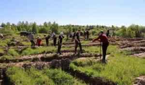 «Сад Памяти»: международная акция выходит на финишную прямую