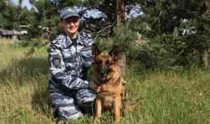 В Архангельске полицейская овчарка Цукини задержала грабителя
