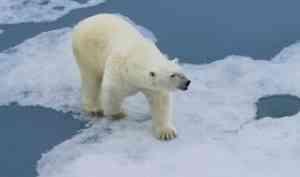 В Архангельск вернулась вторая экспедиционная группа экологического проекта по изучению белого медведя