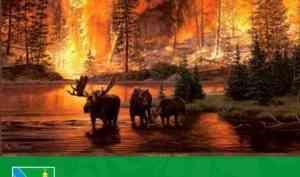 Правила безопасности в лесу, во избежание лесных пожаров