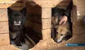 Собачьему приюту в Катунино помогают всем миром. Но хватает только-только