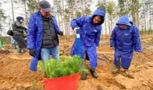 Коряжма присоединилась к Всероссийской акции «Сохраним лес»