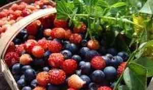 Архангельские аграрии увеличивают ягодные плантации