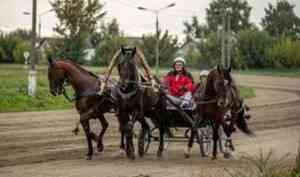 Лошади, выращенные на конезаводе в Вельске, стали победителями и призерами всероссийских соревнований