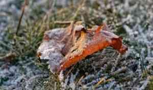 В ночь на 23 сентября в Архангельской области ожидаются заморозки до -7°