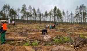 Предварительные итоги всероссийской акции «Сохраним лес» 2021 в Поморье